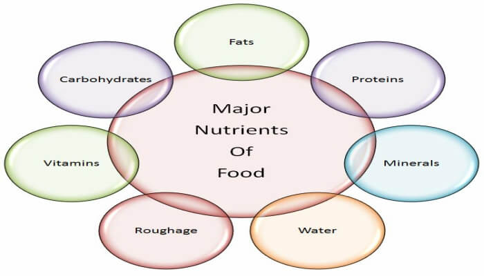 types-of-nutrients